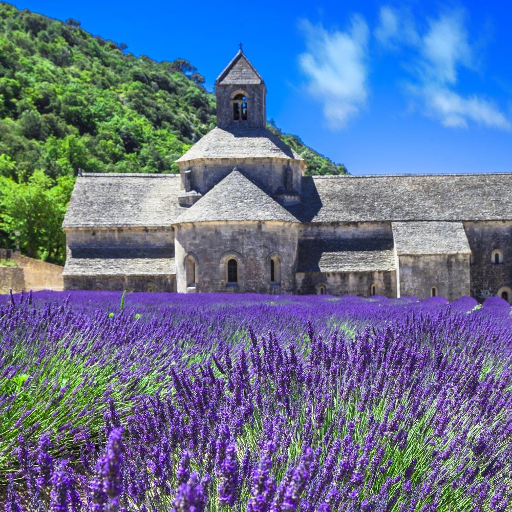 Provences mest kända lavendelfält framför Sénanqueklostret utanför Gordes
