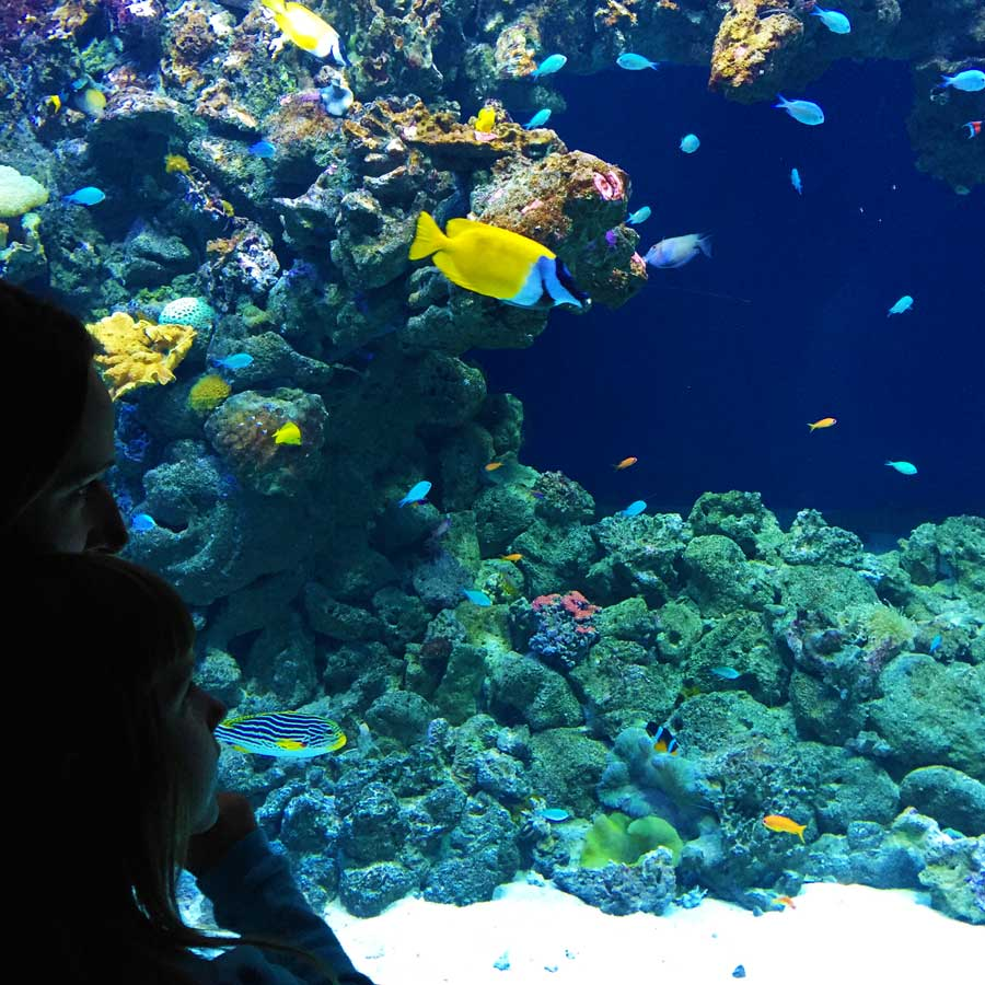 Den blå planet - Korallrevet i oceanavdelningen