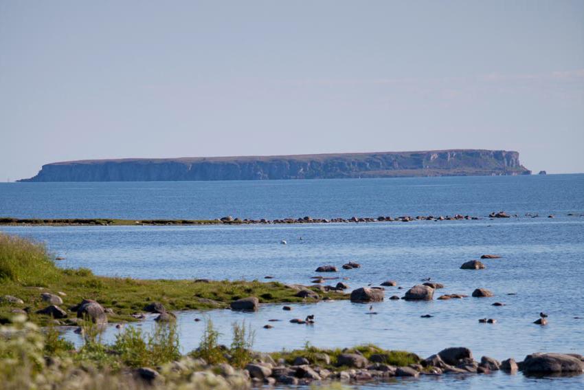 Stora Karlsö Gotland