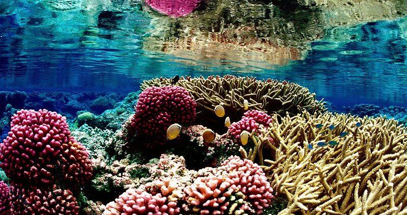 Nytt korallrev upptäckt